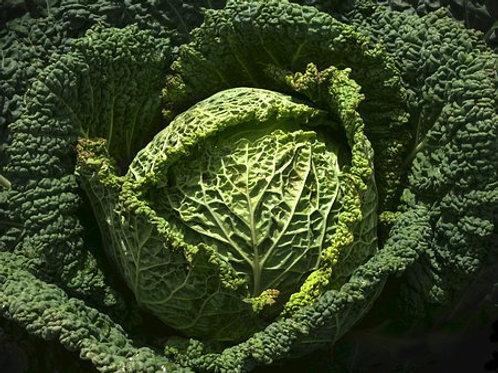 Savoy Perfection Cabbage