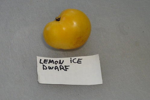 Here is the Dwarf Lemon Ice Tomato, Solanum lycopersicum. This tomato originates from New South Wales, Australia and was be c