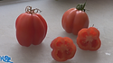 """Here is the Gezahnte Tomato, Solanum lycopersicum, new for 2019. This Indeterminate, regular leaf plant produces 6-10 oz., red, pleated tomatoes and is a heavily fluted variety that originates from Italy and introduced by Frau Isabella Buhrer-Keel of Basel, Switzerland and then offered later by SSE. We found this variety to come true every year from seed. It is a good producer an found this tomato variety to be very hardy and resistant to most blights. The fruits do vary in size an shape and can reach 2.5"""" across and 3 to a bract. Great for making sauces or eating fresh in salads, open pollinated 70 days."""