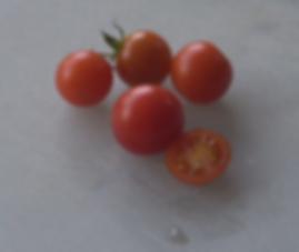 Tiny Tim Tomato (Dwarf)