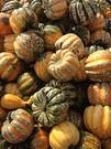 ornamental gourd mix