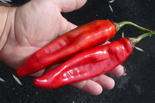 Here is the Puya Chile Pepper, Capsicum annuum, Scoville units: 5,000 to 8,000 SHU. The Puya Chile Pepper or Pulla Pepper ori