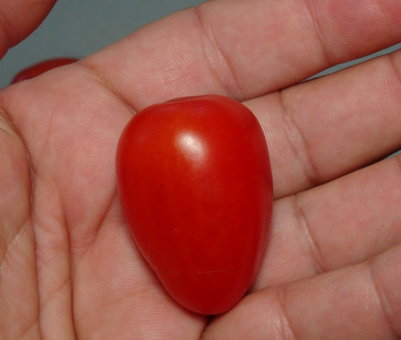 Here is the Rideau Sweet Tomato, Solanum lycopersicum. This tomato originates from Canada and created by Ken Allan of Kingston, Ontario. The fruits are a slightly elongated cherry type with a dark red skin and red flesh inside that gets to about 1 inch round and weighting around .5 oz. The thing about this variety is the fruits are on long bracts with lots of cherry tomatoes! Plants can get to 4 feet tall in really good soil but plants tend to get to 3.5 feet tall. Great for salads, eating fresh and for tomato sauce! Open pollinated indeterminate regular leaf mid season 65-78 days.
