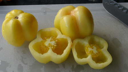 Here is the Douchoua Pepper Tomato,Solanum lycopersicum.This beautiful bell pepper shaped tomato is about the size of a small bell pepper, having a lovely cream white to yellow color. Flavor is good with just the right amount of acid, but fruit is not super juicy, being firm and quite crunchy, refreshing and delicious. These tomatoes are very free of imperfections and have thick skins. It is a good producer. It would make an attractive and unique specialty market variety. Great for stuffing like stuffed peppers and grilling! Open pollinated Indeterminate 70 days.