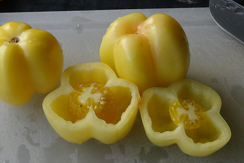Here is the Douchoua Pepper Tomato, Solanum lycopersicum. This beautiful bell pepper shaped tomato is about the size of a sma