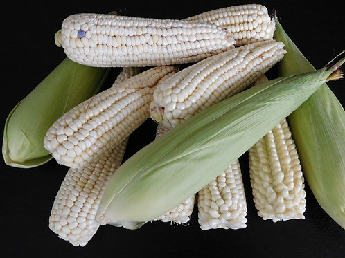 Here is the Stowell's Evergreen Corn, Zea mays. This variety of white corn goes way back to the early to mid 1800's and was d