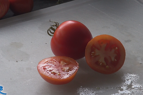 Here is the Celebration Tomato, Solanum lycopersicum, new for 2019. Please don't confuse this with the Celebrity Tomato. This