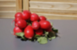 Here is the Champion Radish,Raphanus sativus.It was a all American selection winner in 1957. This classic radish has a red skin with a white flesh inside with a crisp crunchy spicy flavor. They get to 3/4 inches round but can get to 1 inch round. They are among the earliest variety to plant in early spring.They do have a bit of spiciness but often times they are mild. Great for salads and eating fresh! Radishes can be useful as companion plants for many other crops, probably because their pungent odor deters such insect pests as aphids. This is a great starter vegetable for new gardeners. Open pollinated, 40 days.