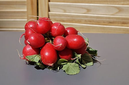 Here is the Champion Radish, Raphanus sativus. It was a all American selection winner in 1957. This classic radish has a red skin with a white flesh inside with a crisp crunchy spicy flavor. They get to 3/4 inches round but can get to 1 inch round. They are among the earliest variety to plant in early spring. They do have a bit of spiciness but often times they are mild. Great for salads and eating fresh! Radishes can be useful as companion plants for many other crops, probably because their pungent odor deters such insect pests as aphids. This is a great starter vegetable for new gardeners. Open pollinated,  40 days.