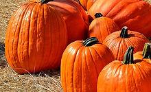 Jack O' Lantern Pumpkin
