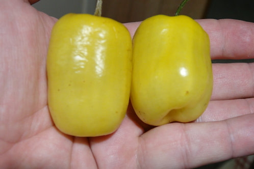 Here is the Manzano Yellow Pepper, Capsicum pubescens, scoville units: 30,000 SHU. It is a black seed variety! Extremely hot,