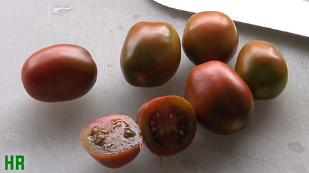 Here is theRussian Black Plum Tomato aka Black Plum tomato and or Brown Plum Tomato, Solanum lycopersicum.It is a very prolific Russian strain, whose brownish fruits are so sweet and meaty that some prefer Black or brown Plum to Roma for making sauces. Also excellent when used in salads or for drying. Oval fruits average 2 to 4 oz.and turn a deep mahogany-brown color at maturity. One of our best yielding tomatoes for both fresh market and home. A very prolific producer,Indeterminate, Open pollinated 75 days from transplant.