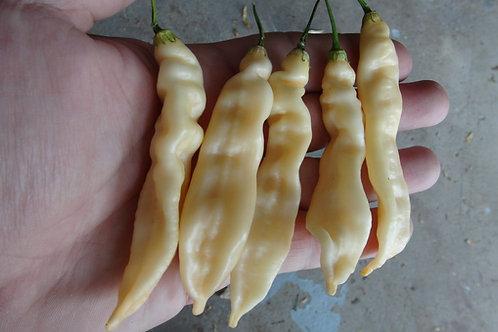 Bolivian Cream Pepper