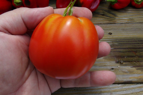 Here is the Belmonte tomato, Solanum lycopersicum This Italian heirloom tomato from the province of Cosenza in Calabria, are