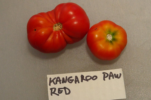 Here is the Kangaroo Paw Red Tomato, Solanum lycopersicum. This tomato originates from the USA. It was created and released b