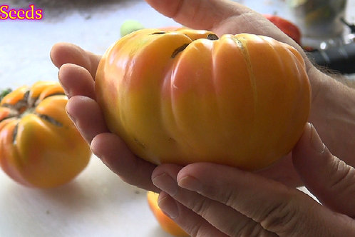 Here is the Virginia Sweet Tomato, Solanum lycopersicum. This tomato originated from Virginia, USA. These tomatoes can get to