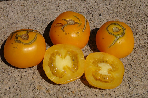 Here is the 67 – Jährige Tomate aus Babelsberg Tomato, Solanum lycopersicum. This tomato originates from Germany and was cons