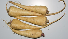 Harris Model Parsnip, Rooted Hamburg Parsley, Petroselinum crispum var. tuberosum, Hollow Crown Parsnip, Pastinaca sativa, turnip, beet, rutabaga, parsnip, harris model parsnip, parsnip seeds, veg seeds, vegetable seeds online, heirloom vegetable seeds, vegetable seeds for sale, vegetable seed companies, vegetable garden seeds, vegetable seeds walmart, growing parsnips, secrets to growing parsnips, parsnips for sale near me, Harris Model parsnip, All American parsnip, Cobham Marrow parsnip, The Student parsnip, Tender and True parsnip, Kral Russian Parsnip, Andover Parsnip, Gladiator Parsnip, Lancer Parsnip, Javelin Parsnip, Skirret Parsnip, Panache Parsnip, vegetable seeds, vegetables, fruits, seed companies, vegetable seeds online, vegetable seed companies, vegetable garden seeds, vegetable seed companies, seeds, gardening, garden, farm, vegetable seeds walmart, vegetable seeds organic, best organic vegetable seeds, cheap seeds, 25 cent seed packets, vegetables, fruits, organic non g