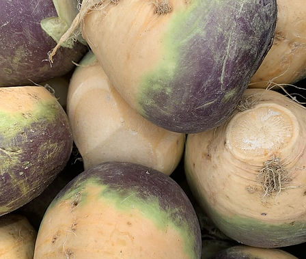 Here is the Laurentian Rutabaga,Brassica napus, variety napobrassica. This Rutabaga has Canadian origins that date back to the 1900's. The Laurentian Rutabaga is a Canadian variation of the American Purple Top Rutabaga. It is a firm creamy white fleshpurple top type Rutabaga with a crisp slightly sweet flavor that goes good in any recipe. It can be eaten raw or cooked and make a great mash potato like dish. They can grow to about 3 to 5 inches and plants get to around 2 feet tall. Because Rutabaga seeds are direct sown in the garden, preparing your soil early in the planning process is essential.Poor soil can negatively affect the flavor, quality and growth of the Rutabagas so be sure to use high quality soil that is soft and loamy. they are biennial so best harvested in first year. Great in soups and stews! Open pollinated 67 days.