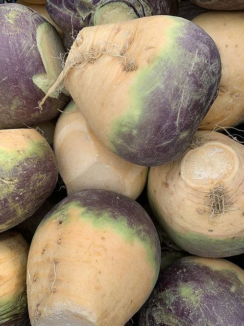 Here is the Laurentian Rutabaga, Brassica napus, variety napobrassica. This Rutabaga has Canadian origins that date back to t