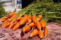Chantenay Red cored Carrot