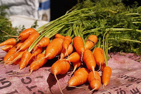 Here is the Chantenay Red Cored Carrot,Daucus carota subsp. sativus.It was Introduced in France in the late 1800's andwas