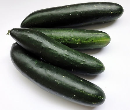 Here is the Poinsett Cucumber,Cucumis sativus. This is the true and original version of this cucumber. It's another dark skinned heirloom cucumber variety like the straight cucumber.This not the Poinsett 76 Cucumber. The fruits get to 8 - 10 inches long. Delicious smooth flavor over the cucumber flavor make these a very popular variety. Good producer and stays crisp in storage. Open pollinated 60 to 70 days from transplanting.