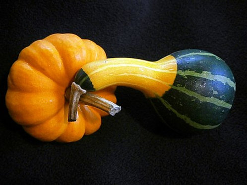 Here is the Spoon Gourd, Cucurbita pepo var ovifera. It is named so because it can be hollowed out an made into a spoon. The