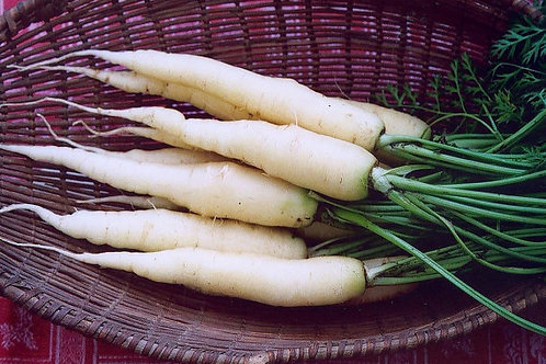 Here is the Snow White Carrot, Daucus carota. This is a white carrot that is a very hardy variety. They can get to 6 to 8 inc