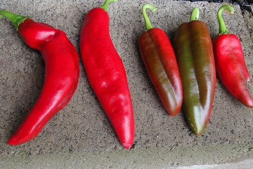 Here is the Lunca Pepper, Capsicum annuum, Scoville units: 000 SHU. This sweet pepper originates from the Lunca regions of Ro