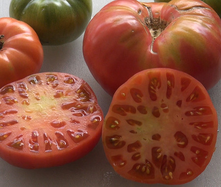 Here is the Henderson's Pink Ponderosa Tomato, Solanum lycopersicum was Introduced by the Henderson Seed Company in 1891. This is a very unique tomato in a few ways. The tomato is a regular leaf, low acid heavy producing tomato variety. It has a true pink color with a nice balance of sweet and tangy flavor which makes 1 to 2 pound fruits.A good northern climate tomato variety Indeterminate. Open pollinated 85-90 days.