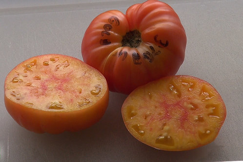 Here is the Gold Medal Tomato, Solanum lycopersicum. It was introduced as Ruby Gold by John Lewis Childs of Floral Park, New
