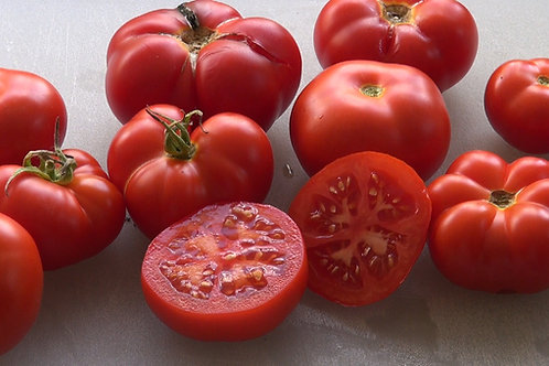 Here is the Placero Tomato, Solanum lycopersicum, new for 2019. This indeterminate, regular-leaf small tomato was originally