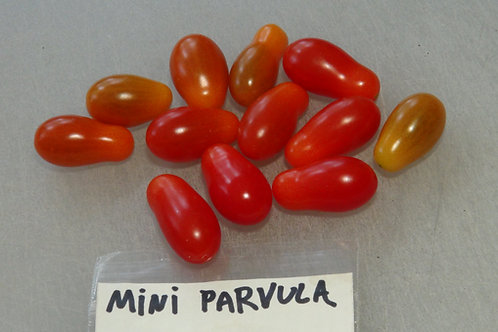Here is the Mini Parvula Tomato, Solanum pimpinellifolium. This tomato most likely originates from Denmark and we acquired it