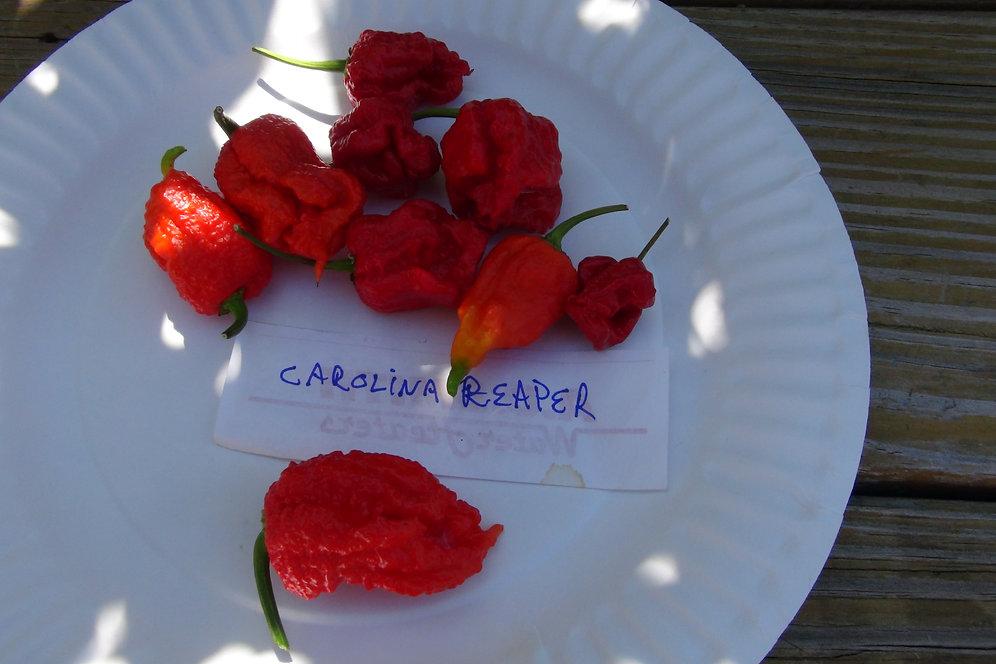 Carolina Reaper HP22B Pepper