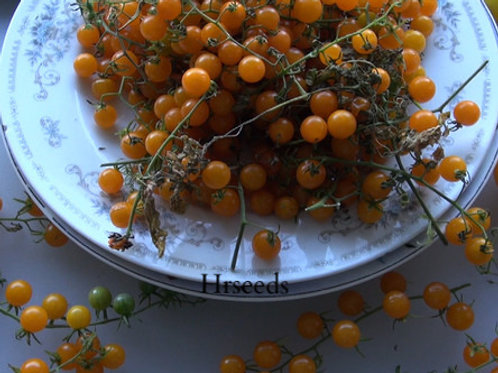 Here is the Golden Currant Tomato, Solanum pimpinellifolium. This tiny Golden Currant Tomato,is a Small golden colored tomat