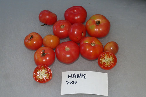 Here is the Hank Tomato, Solanum lycopersicum. This tomato originates from California, USA and created by Donald Branscomb ar
