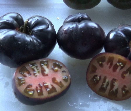 Here is the Black Beauty Tomato, Solanum lycopersicum. This is a very unique tomato in a few ways. The tomato is a low acid heavy producing tomato verity. It has a true black color with a nice balance of sweet and tangy flavor.  It is one of only a few tomatoes that are truly black! Fruits can get to one pound and plants are also good producers. A good northern climate tomato verity. Open pollinated Indeterminate 75 days from transplant.