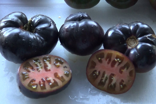Here is the Black Beauty Tomato, Solanum lycopersicum. This is a very unique tomato in a few ways. The tomato is a low acid h