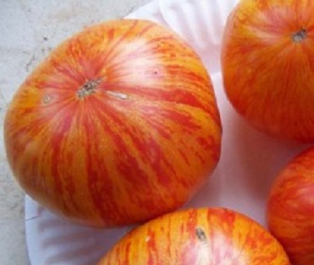 Here is the Beauty King Tomato, Solanum lycopersicum. This tomato originates from Wild Boar Farms Tomatoes, Napa Valley California, USA and was created by Bradley Gates and is a Cross between a Big Rainbow and Green Zebra tomato. The fruits are a bi-colored beefsteak type with a yellow and red skin and red flesh inside that gets to about 3 inch across and weighing as much as 1.5 Lb! The thing about this variety is the inside of the fruits with the bi-colored flesh inside! Plants can get to 7 feet tall in really good soil but plants tend to get to 3.5 feet tall. Great for salads, eating fresh and for tomato sauce! Open pollinated indeterminate regular leaf mid season 75-94 days.