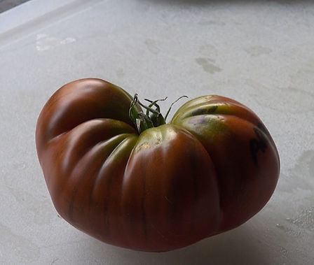 """Here is the Arbuznyi Tomato, Solanum lycopersicum This Russian verity is a rare tomato type and hard to find in the USA. """"arbuznyi"""" means """"like a watermelon"""". That is because it has strips that run down the tomatoes from top to bottom. It has a brick brown color with a nice balance of sweet and tangy flavor witch makes 1-2 pound fruits. Plants are good producers. A good northern climate tomato verity Indeterminate open pollinated 85-90 days."""