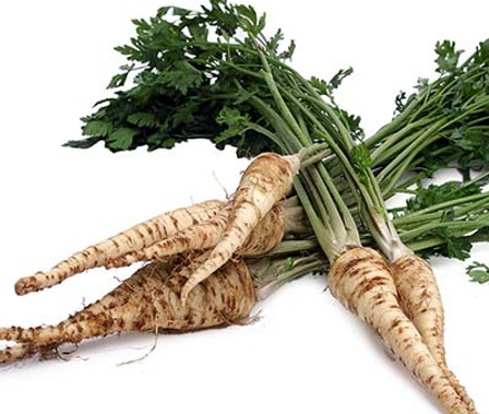 """Here is the Rooted Hamburg Parsley, Petroselinum crispum var. tuberosum. This biennial goes way back in history before the 1600's and is referred to as """"Hamburg"""" or """"Hamburg Parsnip"""". It is grown for its root and not really for it's leaves though the leaves can be used the same as regular parsley while the root taste like parsnip. The tuber or root and vary in shape and size depending on the soil its grown in, They can be long like a carrot or almost ball shaped like a turnip. We found this variety to do well in colder months and taste great in spring! We also use them in soups and stews and some say you can make a mash potato type dish with it. Please keep in mind that this plant can become invasive if left to seed so be sure to harvest in the first year of growth. Open pollinated 90 days."""