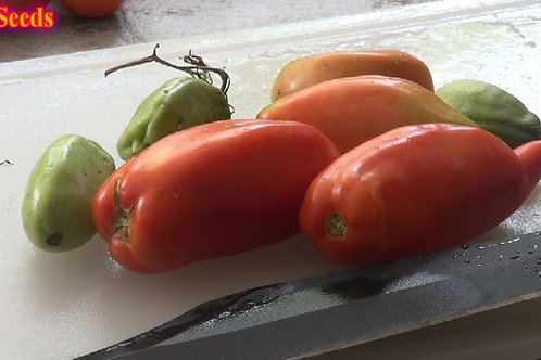 Here is the Jersey Devil Tomato Solanum lycopersicum, A Pendulant, pointed, elongated like fruits are slow to set but yield