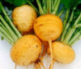 Boule D'or turnip
