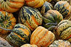 Here is the Table Queen Acorn Squash, Cucurbita pepo. This is a dark green winter squash with a yellow flesh inside with excellent flavor. It is one of the most sought after squash next to Zucchini squash. The fruits get to around 6 to 8 inches with a dark green skin sometime with over tones of orange and yellow with spots when left on the vine for to long. They are best harvested young before the Skins harden and seeds enlarge as the squash matures but you can harvest them even in their later stages and make pies and soups with it! They do have a long shelf life and the seeds are great roasted. Open pollinated 70 to 90 days.