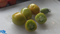 Here is the Chile Verde Tomato Tomato, Solanum lycopersicum, This indeterminate, regular-leaf tomato was created by Tom Wagner. These elongated shaped fruits are considered a paste tomato due to having low water content. It's also lower in acid more than the standard slicer tomatoes, reaching a width of about 2 inches and a length of about 3 inches. Great for making sauces, Open pollinated 90 days.