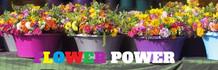 flowers-power.jpg