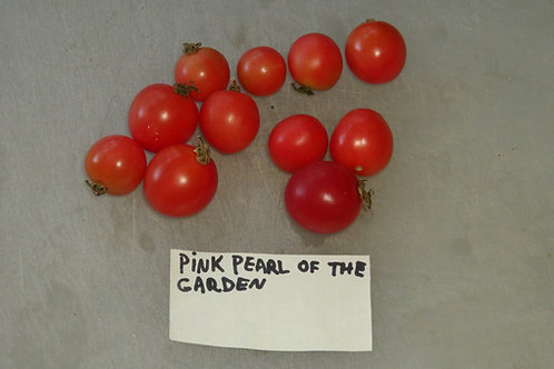 Here is the Cадовая жемчужина розовая, Solanum lycopersicum. This tomato originates from Russia andwe acquired it from a see