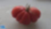 Zapotec tomato