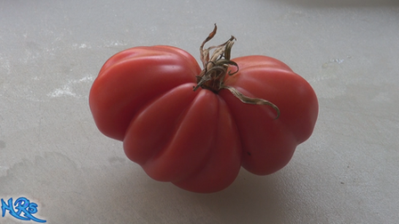 The Zapotec tomato, Solanum lycopersicum is a fantastic tasting tomato! The fluting on the tomato brings in an old world tomato feel. They are a good producer. This indeterminate, regular-leaf tomato is one of the most beautiful tomatoes i ever seen! Heavily ribbed and very juicy! We are very excited to bring this tomato variety to you. Open pollinated 80 days.